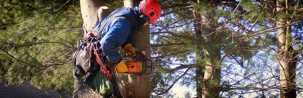 Ohtliku puu eemaldamine
