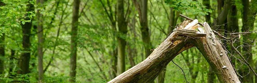 Ohtlik puu