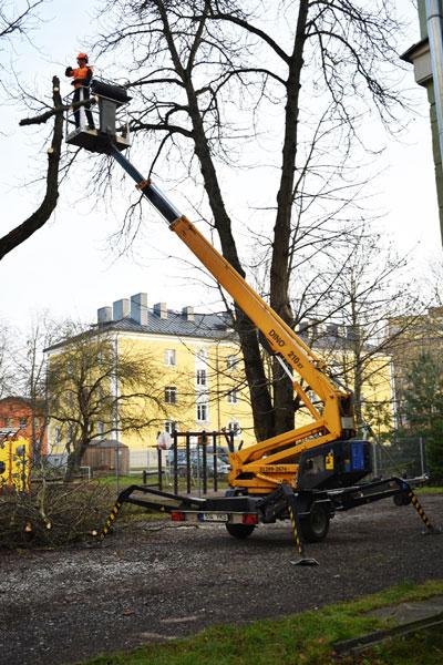 ohtlik puu lõikus tõstukiga
